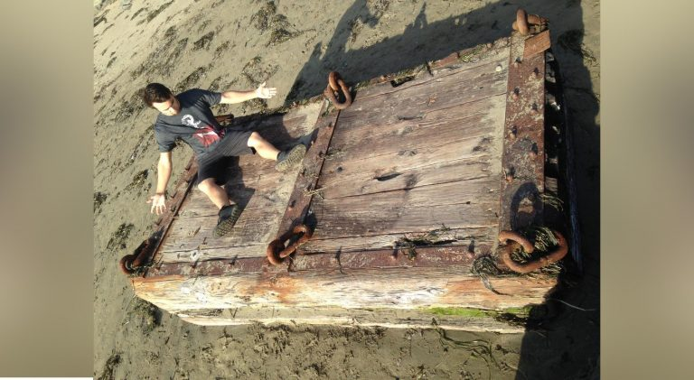 31 Times People Found The Most Curious Things On The Beach